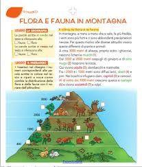 flora e fauna Flora And Fauna, Education, School, Blog, Anna, Studio, Environment, Study, Schools