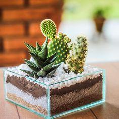4 glass cactus arrangements and original terrariums, art garden indoor plants Mini Cactus Garden, Cactus House Plants, Succulent Gardening, Cactus Decor, Cacti And Succulents, Planting Succulents, Cactus Terrarium, Glass Cactus, Garden Terrarium
