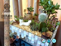 Linha Lounge Bike White Gold 2.0 Lounge, Plants, Line, Gifts, Celtic, Airport Lounge, Drawing Rooms, Lounge Music, Flora