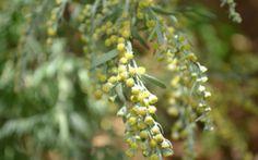 Natural Remedies, Fruit, Nature, Plants, Historia, Naturaleza, Plant, Natural Home Remedies, Nature Illustration