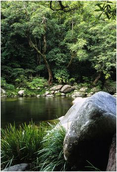 The Daintree Rainforest north qld Australia Queensland Australia, Australia Travel, Beautiful World, Beautiful Places, Daintree Rainforest, Wild Forest, Land Of Oz, Island Resort, Great Barrier Reef