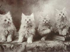 Postcard アンティークポストカード 並んで記念撮影猫の兄弟絵葉書 インテリア 雑貨 家具 Antique ¥500yen 〆08月01日