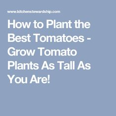 How to Plant the Best Tomatoes - Grow Tomato Plants As Tall As You Are!