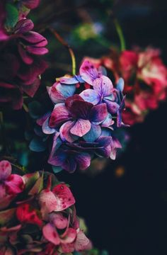 Blumen Foto's Blumen Foto's The post Blumen Foto's appeared first on Diy Flowers. Flower Phone Wallpaper, Nature Wallpaper, Beautiful Flowers Wallpapers, Floral Wallpapers, Hydrangea Flower, Hydrangeas, Lilacs, Flower Aesthetic, Pretty Flowers
