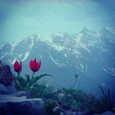 Instagram photo by @kurdistanheye (Kurdistan)   Statigram