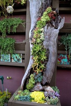 11 pictures of crazy cool uses for tree stumps, outdoor furniture, outdoor living, repurposing upcycling, woodworking projects, Photo via Jessica Johnson on flickr