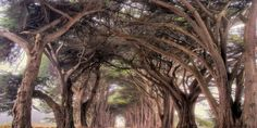 9 Photos of the Oldest Trees, Older Than the Pyramids in Egypt | Amazing Online Magazine