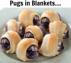 Pugs in blankets Silly Dogs, Cute Funny Dogs, Cute Pugs, Cute Funny Animals, Funny Pugs, Funny Animal Jokes, Funny Dog Memes, Funny Animal Videos, Pug Videos