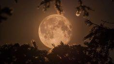 16 fotos espetaculares da maior e mais bonita lua do ano: em julho, a lua ficou 50.000 km mais perto... - Divulgação