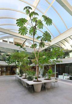 Amazing Artistic Tree Inside House Interior Design 16