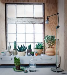 BRICK HOUSE : indoor plants