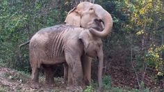 After Years Apart, Watch This Mother Elephant Reunite With Her Baby