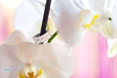 "Polubienia: 154, komentarze: 2 – Dubai Wedding Photographers (@dubai_wedding_photographer) na Instagramie: ""Shoot from our latest #engagement party for Saudi Arabia couplephoto by @dubaifemalephotographer…"""