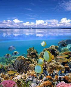 Fiji Island under the sea :) Dream Vacations, Vacation Spots, Great Barrier Reef Australia, Places To Travel, Places To See, Beautiful World, Beautiful Places, Beautiful Ocean, Cahuita