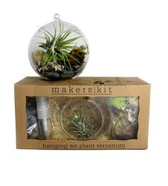 This is totally on my wish list. Air plants make me so happy! :: Hanging Air Plant Terrarium Kit by MakersKit