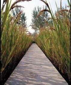 // Shenyang Architectural University Campus by Turenscape Urban Landscape, Landscape Design, Garden Paths, Garden Landscaping, Plant Design, Garden Design, Wetland Park, Farm Stay, Pathways