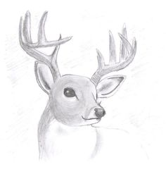 Gallery For  Realistic Bunny Drawing  to draw list  Pinterest