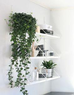 Een hangplant op het witte schap