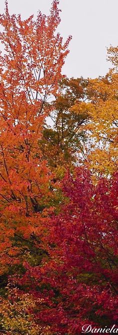 the colors of fall. Autumn Scenery, Autumn Trees, Fall Landscape, Magic Forest, Soft Autumn, Fall Pictures, Fall Harvest, Shades Of Red, Great Artists