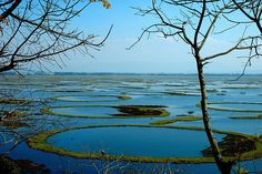 Loktak lake or The Floating lake.  Manipur is a beautiful place, rich with amazing culture  http://www.thrillophilia.com/blog/things-to-do-in-manipur/