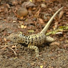 Galakiwi is the leader in running premier land based tours in the Galapagos Islands. We operate active adventures and wildlife trips in Galapagos National Park.