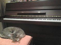Tengo dos pianos y dos gatos.....y cómo les gusta.