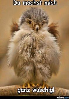 Du machst mich ganz wuschig! - #federn #vogel #wuschig