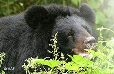 Animals Asia -- dedicated to ending animal cruelty.  what's special about this organization is that they are one of the only organizations dedicated to saving the Asian Moon Bear -- they have sanctuaries in Vietnam and China and have saved over 381 bears thus far from bile farming.  A great organization -- sponsor a bear!!  :)