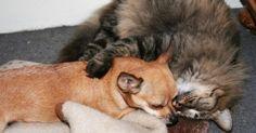 Perdu, un chat retrouve le chemin de sa maison… grâce à son meilleur ami chien !