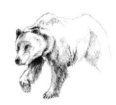 bear in shorts illustration