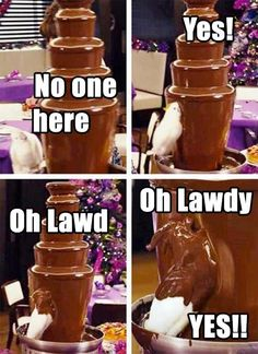 Parrot finds a chocolate fountain… this is way too funny