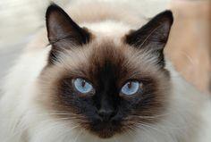 Google Image Result for http://2.bp.blogspot.com/-5HdZMDMTEfc/T-ph5QE5iYI/AAAAAAAAFjM/H-fXb6jqOMA/s1600/cat4.jpg