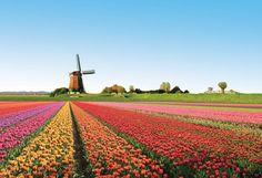 Netherlands Landscape | The Netherlands - Landscape