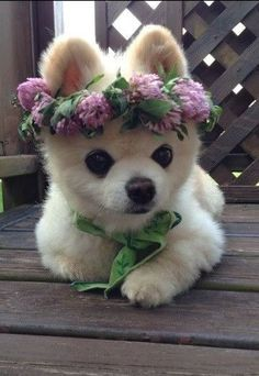 Such a princess she is...with her crown of flowers
