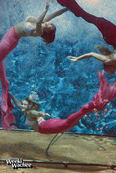 1000 images about mermaids of weeki wachee on pinterest