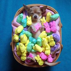 "Surrounded by all his ""Peeps"""