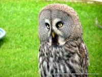 Diary Of A Wild Country Garden: The Mysterious Owl Mystery, Wildlife, Owl, Birds, Country, Mysterious, Garden, Nature, Articles
