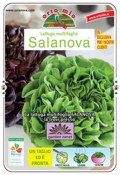 Buongiorno da Garden Zanet. Oggi vi vogliamo presentare la lattuga Salanova, un'esclusiva di Orto mio: la trovate nel nostro Garden!   E' buonissima e ad elevata digeribilità. Velocissima da pulire e preparare: con un solo taglio si separano tutte le foglie.  Consigliamo di trapiantare la lattuga Salanova a distanza molto più fitta rispetto alle altre varietà, a circa 10-15 cm tra pianta e pianta. Si può coltivare tutto l'anno anche in vaso sul balcone. #insalata #salanova