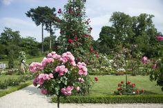 La rose, reine de nos jardins, refleurit au printemps : l'occasion de découvrir ses innombrables variétés dans les plus belles roseraies de France. Stuff To Do, Things To Do, Nature Aesthetic, Flowers, Plants, Occasion, Gardening, France, Gardens