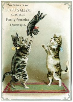 "Victorian Trade Card cats:  ""Beard and Allen Choice Family Groceries. SEE  ""MY  VICTORIAN CHRISTMAS ORNAMENTS"" BOARD FOR NUT CUP ORNAMENT I DESIGNED."
