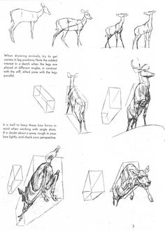 Ken Hultgren the Art Of Animal Drawing Book Online Inspirational Book the Art Animal Drawing by Ken Hultgren Cartoon Drawing Tutorial, Sketches Tutorial, Cartoon Girl Drawing, Cartoon Drawings Of Animals, Animal Sketches, Art Sketches, Deer Drawing, Nature Sketch, Drawing Lessons