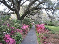 Pictures Of Orton Plantation And Gardens Spring 2005