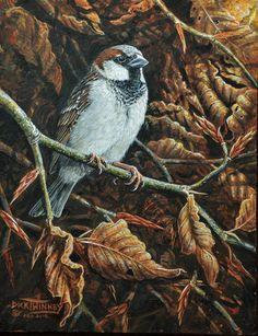"The Art of Dick Twinney - Cornish Wildlife Artist .. "" Country Gent ~ House Sparrow & Winter Beech"""