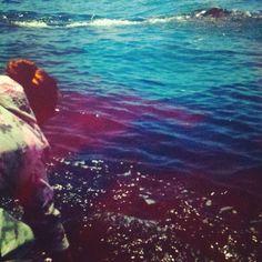 Vimos Ballenas Azules