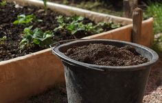 Compost tea is an effective, low-strength, natural fertilizer for seedlings and garden plants. Learn the best way to brew your own compost tea. Lush Garden, Herb Garden, Garden Plants, How To Make Compost, Making Compost, Compost Tea, Small Patio, Back Gardens, Cool Plants