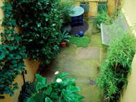 Plants with strong architectural forms often thrive in a shady garden, as in this basement garden where they also contrast well with the surrounding walls.