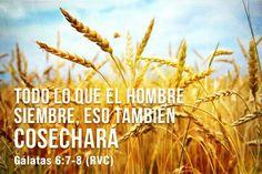 Gálatas 6:7-8 (RVC)