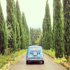 FIAT and Cypress trees in Tuscany