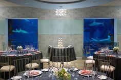 A unique Las Vegas wedding at Shark Reef at Mandalay Bay | Mandalay Bay Las Vegas Wedding