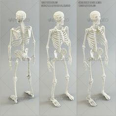 Low Poly Base Mesh Skeleton - 3DOcean Item for Sale